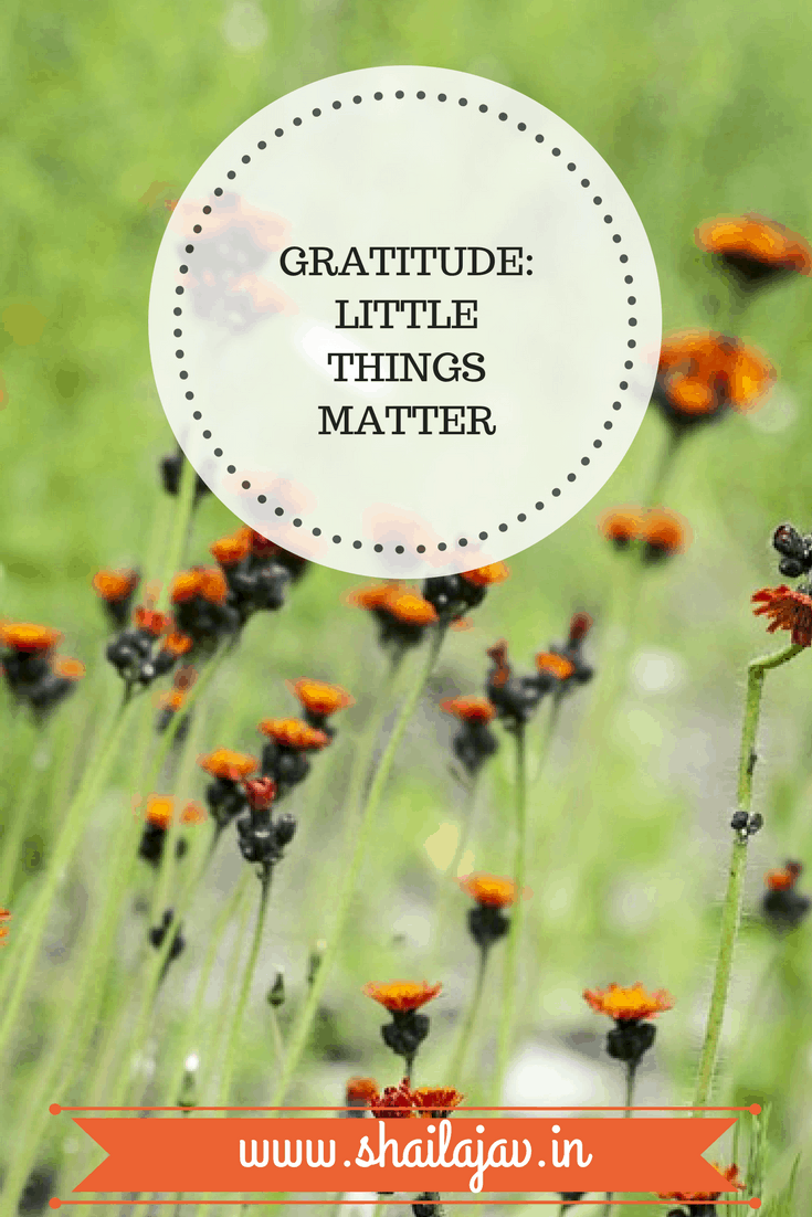 Gratitude is in the little things. Are you making gratitude a habit? Look for the tiny signs that make it possible. #Gratitude #ShailajaV